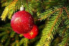 Red balls on spruce, part of the Christmas tree with Christmas decorations.  stock image