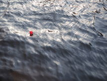 Red baloon floating on the water. Beautiful red air baloon floating on curly dark waters of the river Stock Photography