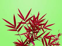 Red bamboo leaves isolated in bright green background Royalty Free Stock Photos