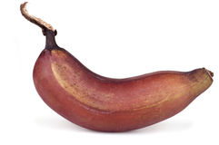 Red banana Stock Images