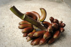 Red banana Stock Image