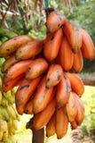 Red Banana Fruit on the road Sri Lanka. Red Banana Fruit at a fruit kiosk on the road Sri Lanka Stock Photo