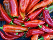 Red Banana Peppers Stock Photography