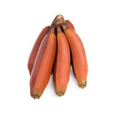 Red bananas. Royalty Free Stock Images