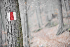 Red band sign on a tree Stock Photo