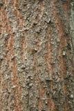 Red Bark Texture.  stock photos