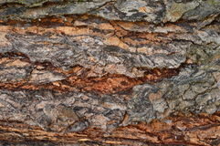 Red bark of the trunk. Royalty Free Stock Photos