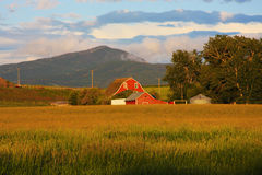 Red Barn. In a Grassy Meadow with Mountains in the Background Royalty Free Stock Photo