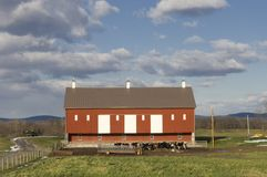 Red Barn. View of a red barn, cattle, and pasture in a beautiful rural setting Royalty Free Stock Photography