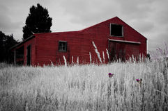 Red Barn. In field with single flower Stock Images