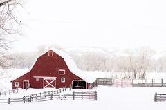 Red barn. In snow on lamb farm Stock Image