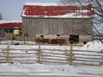 Red Barn. In Uxebridge Ontario Canada Stock Photography