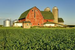 Red Barn And Bean Field Royalty Free Stock Photography