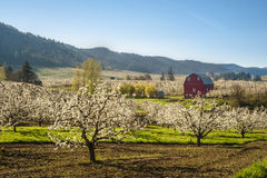 Red barn, apple orchards Stock Photo