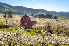 Red barn, apple orchards Stock Photos
