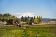 Red barn, apple orchards, Mt. Adams Royalty Free Stock Photo