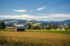 Red barn, apple orchards, Mt. Hood Stock Images