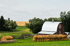 Red Barn with Bales. Red barn with silver gray metal roof.  Bales of straw stacked in front and trees and wheat field in the background Stock Photo