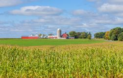 Red Barn and Buildings with Corn Field Foreground Royalty Free Stock Photo