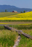 Red Barn and Canola Field Stock Photography