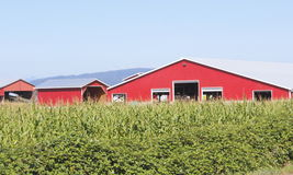 Red Barn and Corn Field Royalty Free Stock Photos