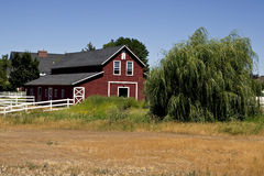 Red barn in countryside. Field in front of red barn in countryside, summer scene Royalty Free Stock Image