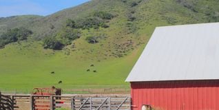 Red barn cows Royalty Free Stock Photo