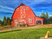 Red barn with dog Royalty Free Stock Photography