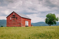Red Barn in the feild Stock Image