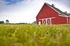 Red Barn in a Field Stock Image