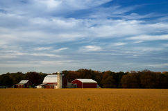 Red Barn in Golden Field. Is a landscape photograph of a beautiful red barn in the center of a golden field of dried crops. This photograph was created by Royalty Free Stock Photo