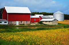 Red Barn with Golden Soybeans Stock Photo