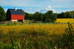Red Barn with Golden Soybeans Stock Photography