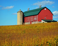 Red Barn with Golden Soybeans Stock Photos
