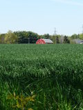 Red barn and green cornfield, Ontario, Canada Stock Photography