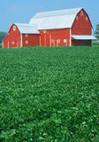 Red barn with green field Royalty Free Stock Images