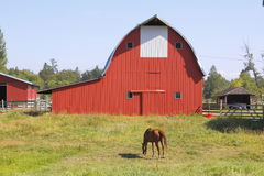 Red Barn and Horse Grazing Stock Photo
