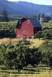 Red barn & orchards. Royalty Free Stock Image