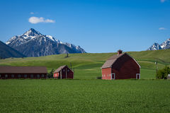Red barn in Oregon Stock Image