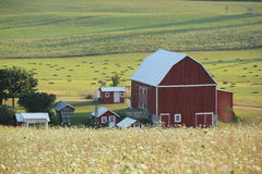Red barn and out buildings. Red barn and other buildings. Bales of hay background Royalty Free Stock Photo