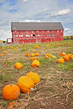 Red Barn on pumpkin farm Royalty Free Stock Image