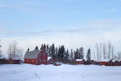 Red barn and sheds in winter. Tall arched barn and red sheds on a farmyard in winter Stock Photography