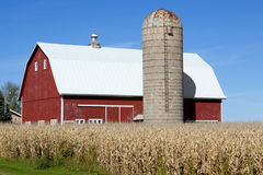 Free Red Barn, Silo And Corn Field Royalty Free Stock Photos - 16244878