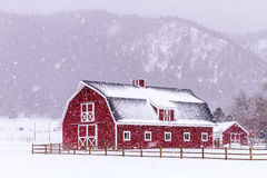 Red Barn in the Snow. Bright red barn covered with snow surrounded with wooden fence on snowy winter day Royalty Free Stock Image