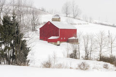 Red Barn and Snow. On a cold winter day, a red barn stands in stark contrast to snow covered fields as more snow continues to fall stock image