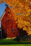 Red barn surrounded by yellow fall leaves in New England stock image