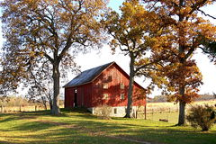 Red barn and tall fall trees Stock Image