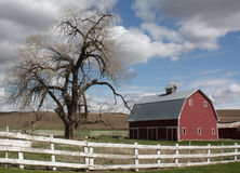 Red barn and tree. Red barn on farm outside of Colfax, WA royalty free stock photography