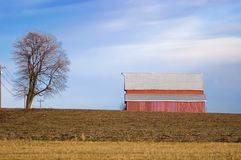Red Barn and Tree on Winter Farmland Stock Photography