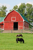 Red barn and two ponies Stock Photos